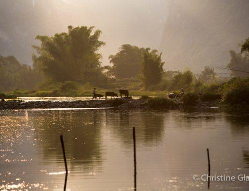 China: Bringing Home The Water Buffalo
